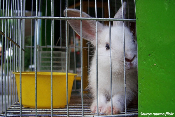 moving with rabbits: how to move house with a rabbit