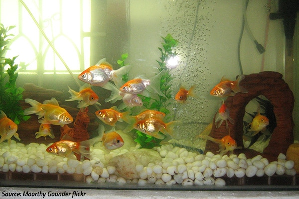 how to move a fish tank