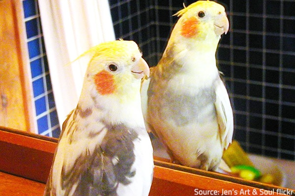 Tips for moving with pet birds.