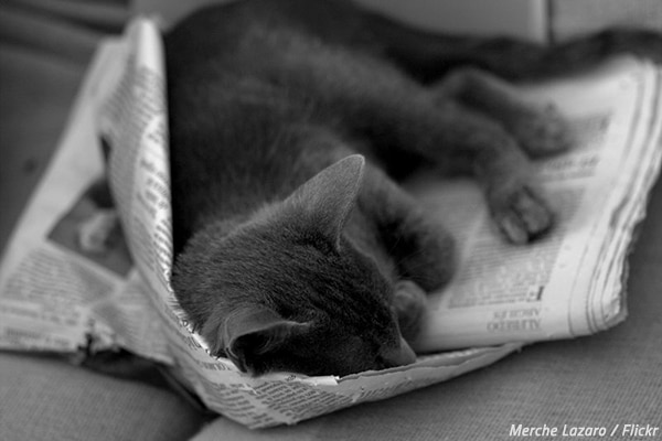 How to pack with newspaper